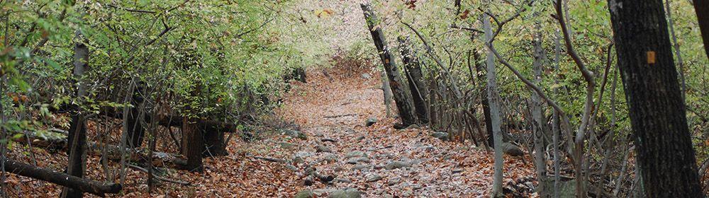 Camino en el otoño