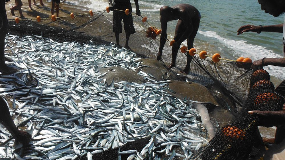 Pesca de arrastre, una pesca por descarte. Fotografía de Kevin Connors M.Ed.