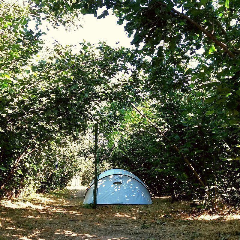 Tienda de campaña bajo los avellanos en Ecocamp Vinyols