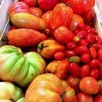 Variedades de tomates Km0