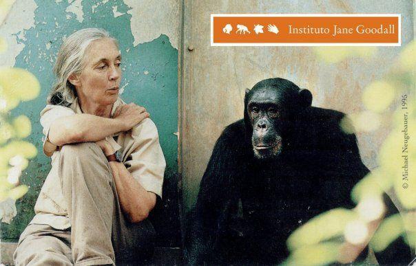 Jane Goodall en la reserva de Gombe.  Minerales en conflicto.