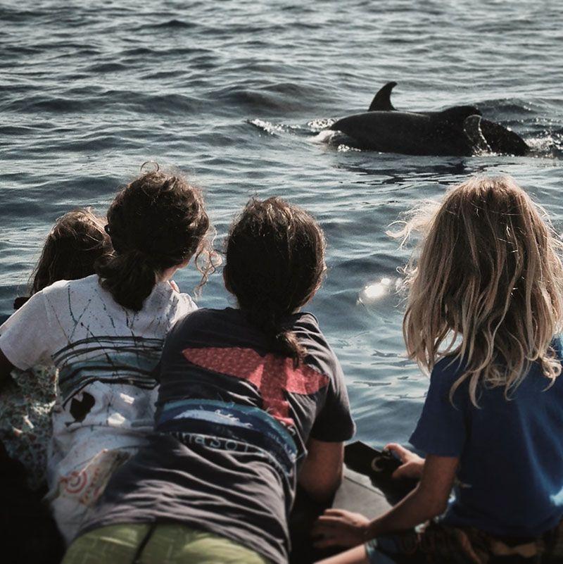 Viendo delfines mulares en Tenerife