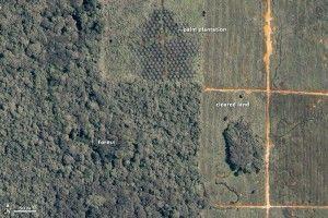 Deforestación por cultivo de Aceite de palma