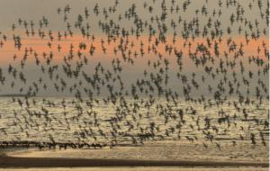 Aves en Delta del Ebro