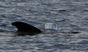 Plástico en el mar. Calderón tropical con botella de agua