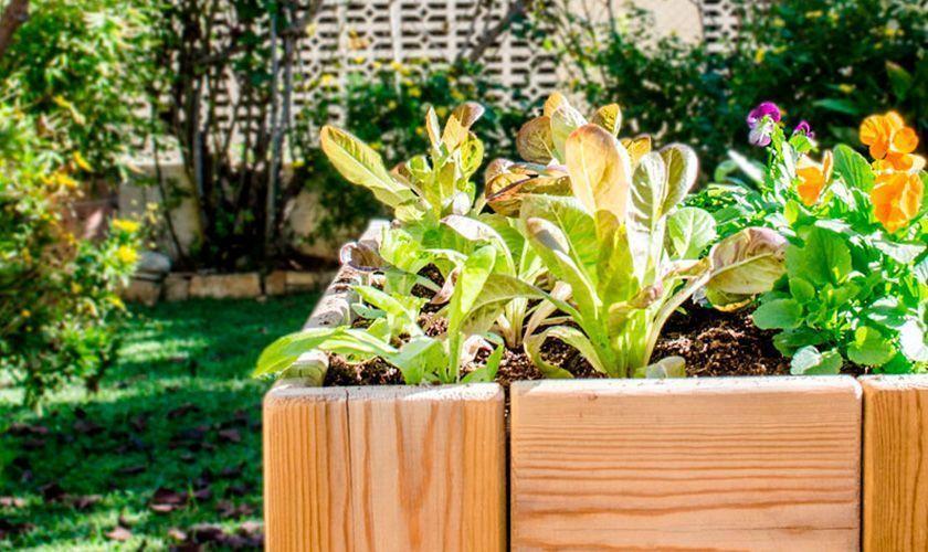 5 consejos para comenzar un huerto en casa