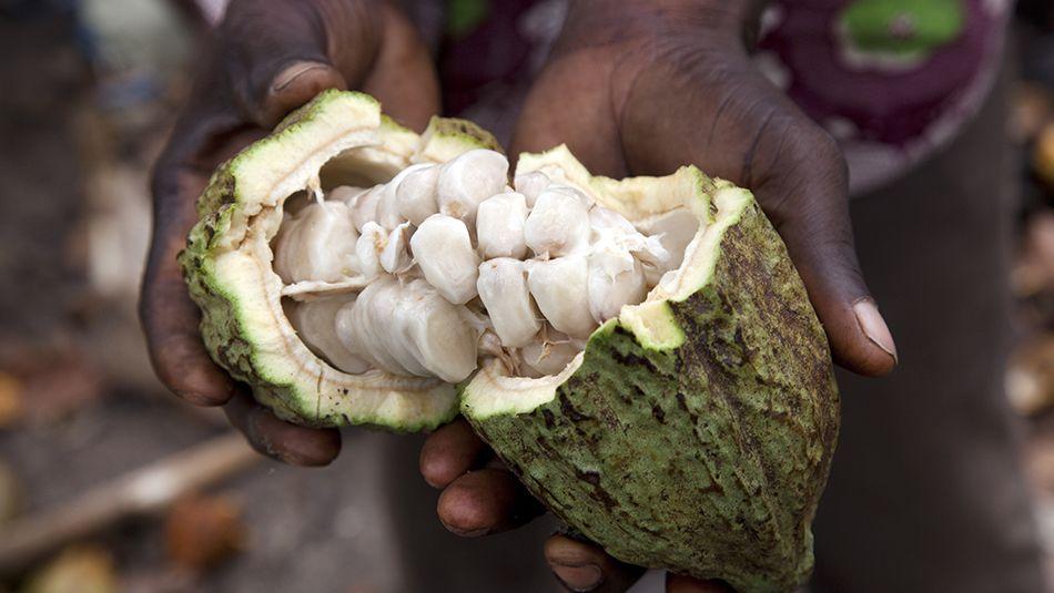 Ejemplos de productos de comercio justo. Semilla de cacao